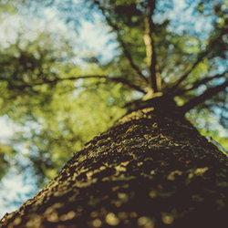 shaded tree tops