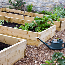Three Raised Bed Gardens with Greens and a Watering Can