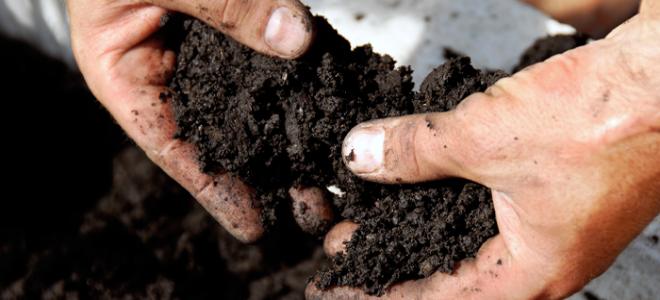 rich soil in a man's hands