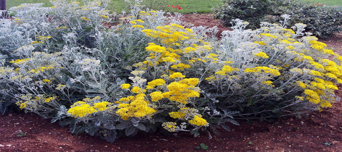 gray and yellow garden plants
