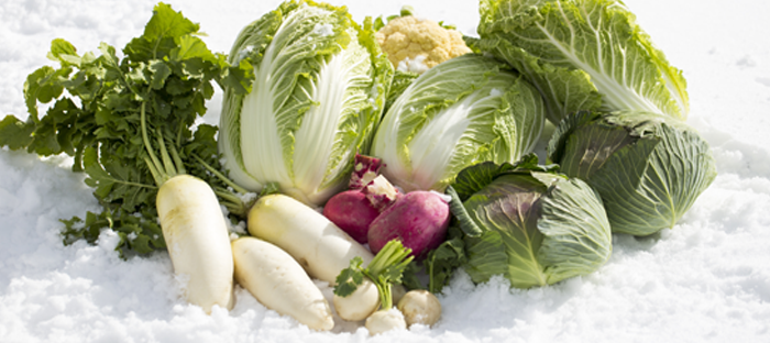 Vegetables on Snow