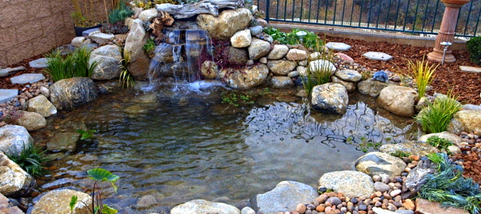 Let S Go Fishing Building Your Own Backyard Pond Dave