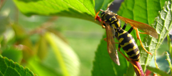 Wasp on green plant