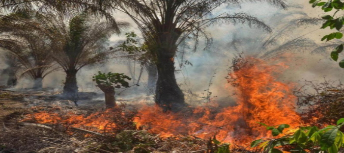 Tropical trees burning