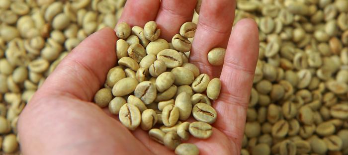 Open hand scooping up seeds
