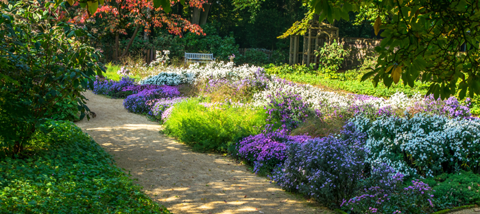 Colorful Garden Path Lined with Blue and Purple Blooms