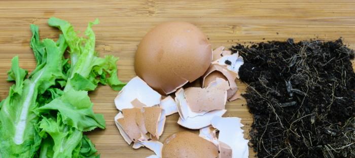 Homemade Fertilizer from Household