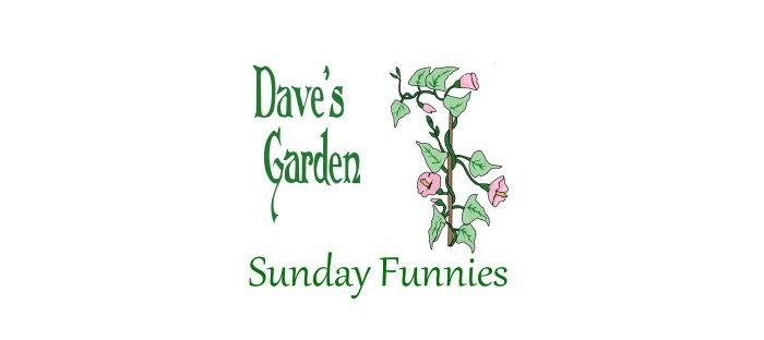 Sunday Funnies banner and logo