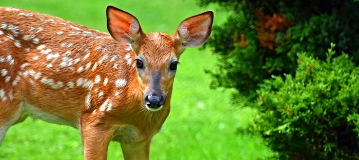 Attracting Wildlife to Your Yard - Dave's Garden