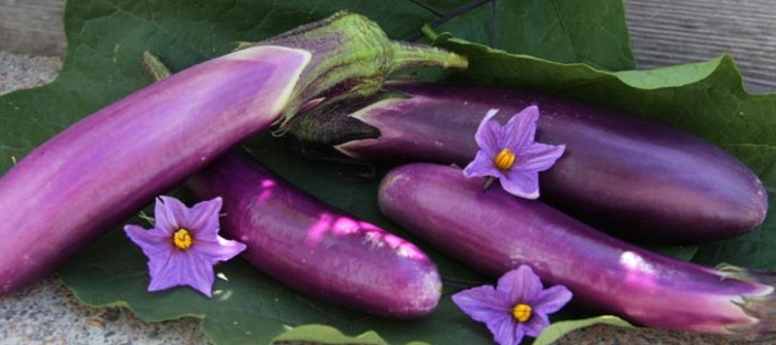In The Garden And In The Kitchen, There. Growing Eggplant