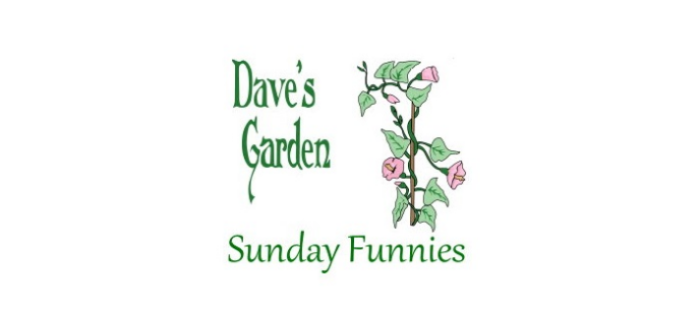 Sunday Funnies logo with vine and header
