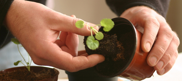 Ways to Boost Seedling Growth for Transplant - Dave's Garden