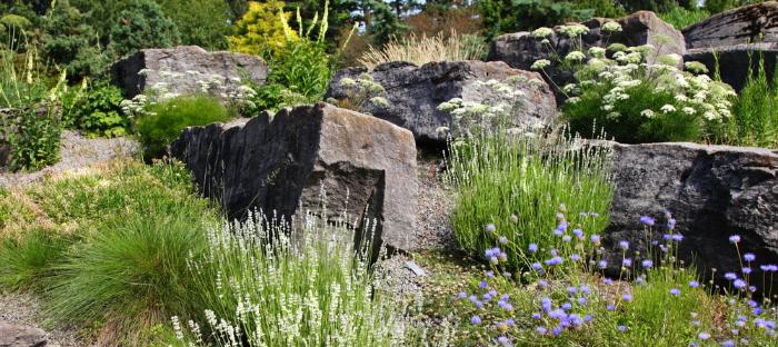 rock garden with plants