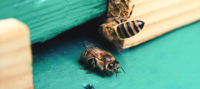 Bees Entering Wood Hive