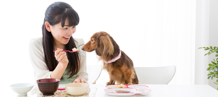 Woman offers dog spoonful of rice