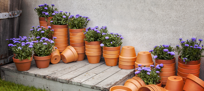 Stacks of pots with purple flowers