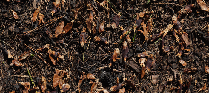 Leaves and Twigs on top of Soil