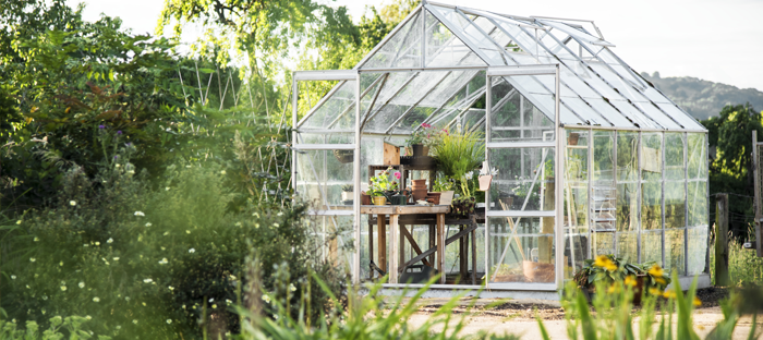 Common Greenhouse Problems And Solutions Dave S Garden