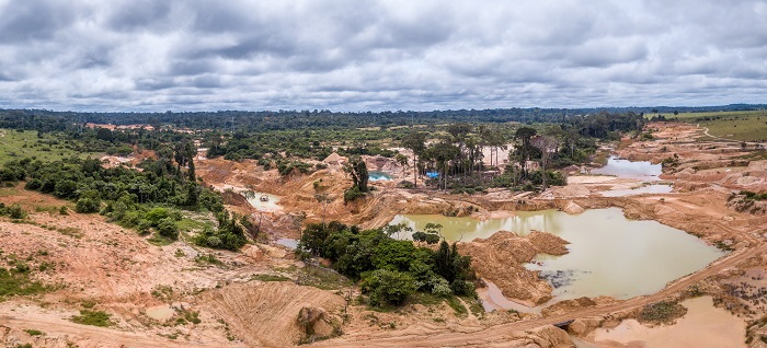 clearcut rainforest