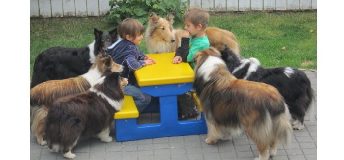 dogs at a picnic table