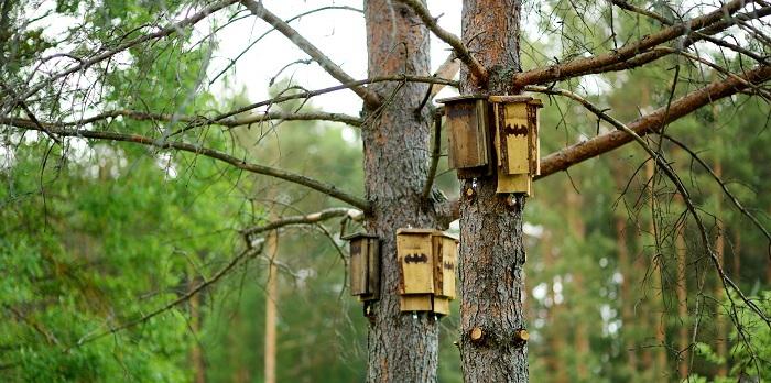 bat houses in dead trees