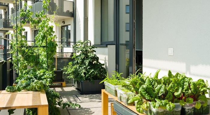 vegetable plants on balcony