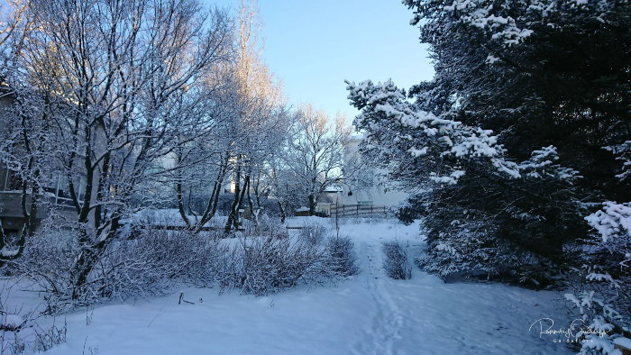 winter in an icelandic garden