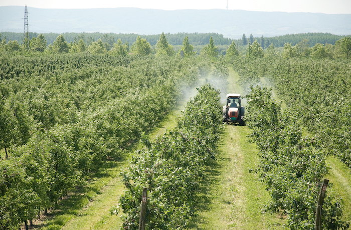 spraying pesticides on an apple orchard