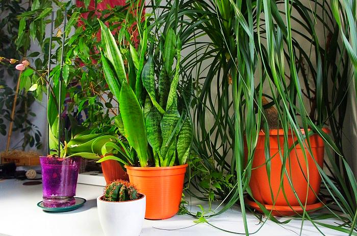 Healthy indoor plants of several species