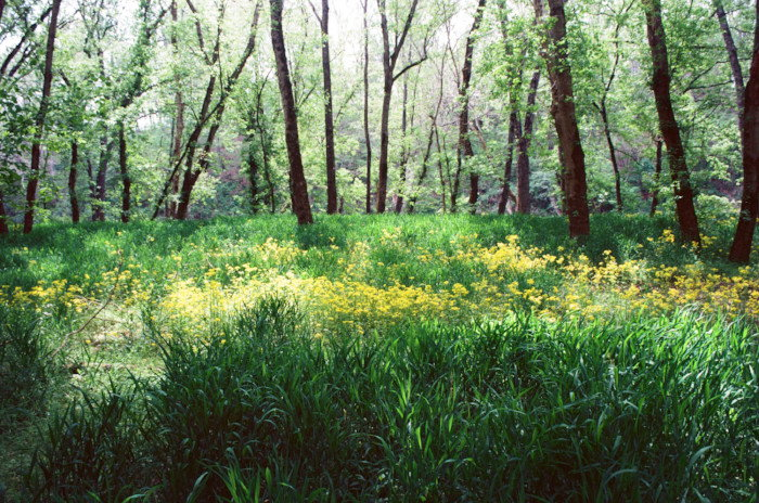 yellow flowers blooming in a forest