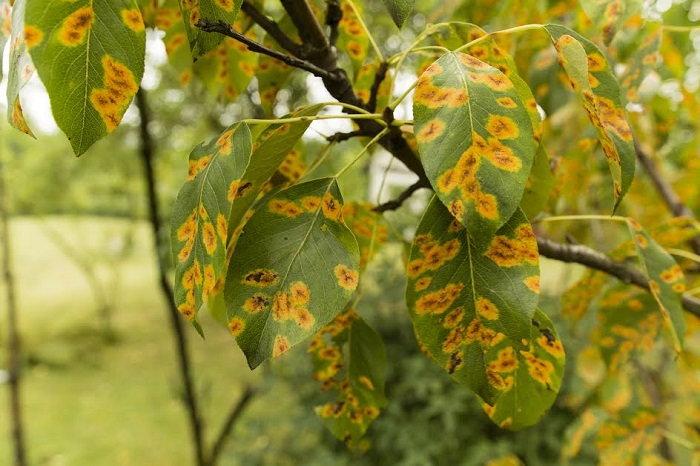 tree, disease