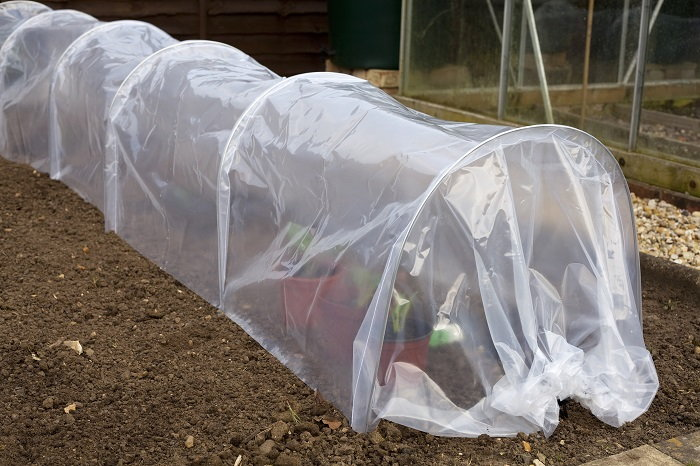 cover your cold-sensitive plants during the winter