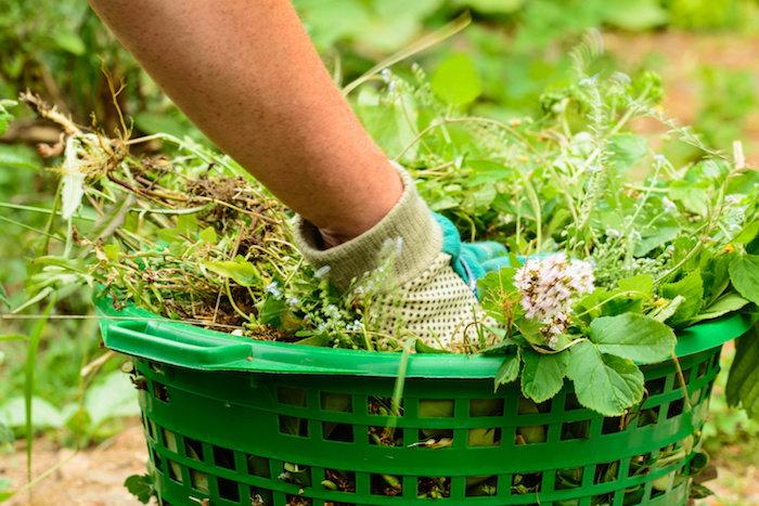 put those weeds to good use!