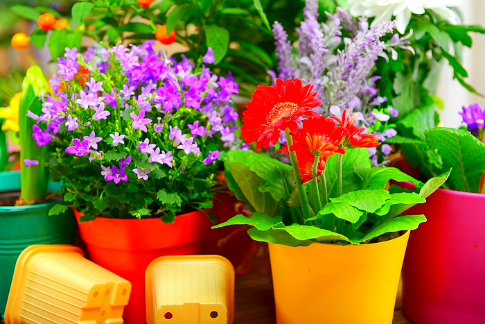 Purple and red flowers blooming indoors