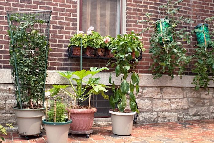 container garden growing along a home's foundation