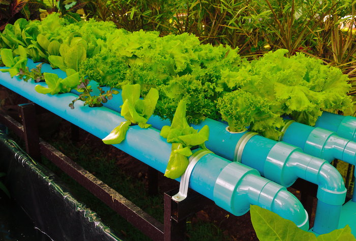 a hydroponic system