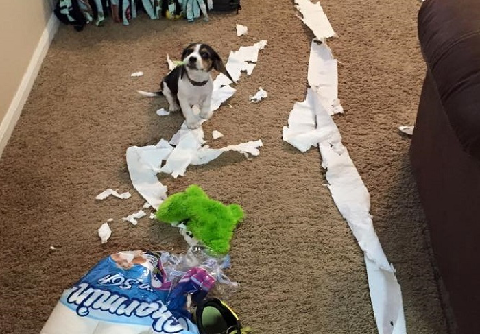 dog and toilet paper