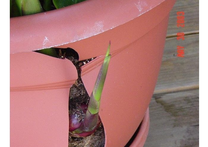 canna breaking container
