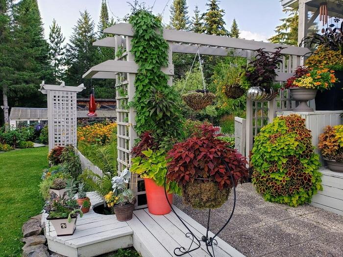 beautiful patio garden