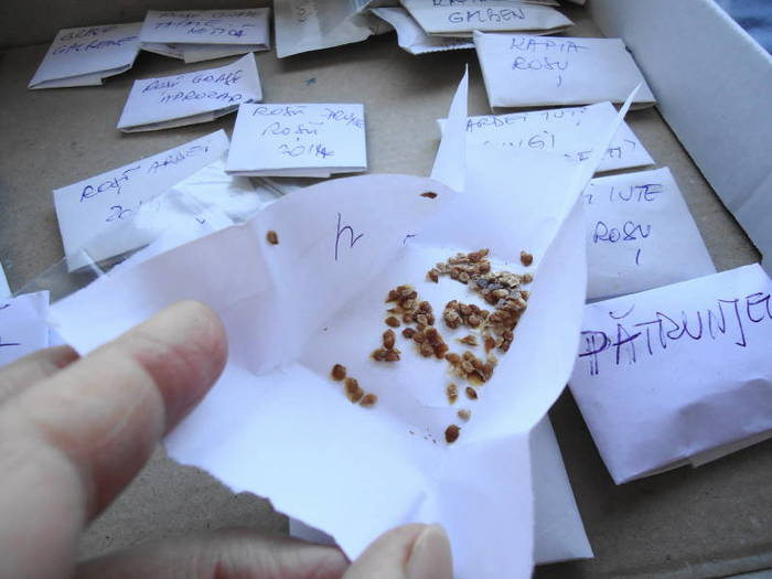 The seed envelope I chose for sowing