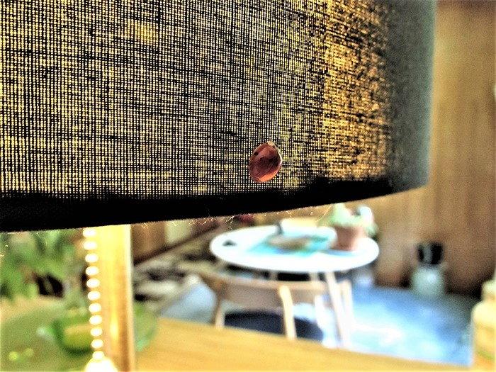 ladybug on screen