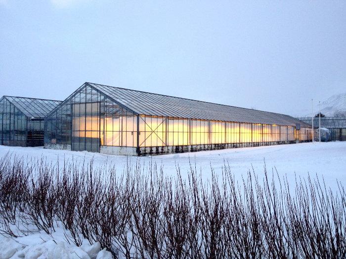 icelandic greenhouses in the winter