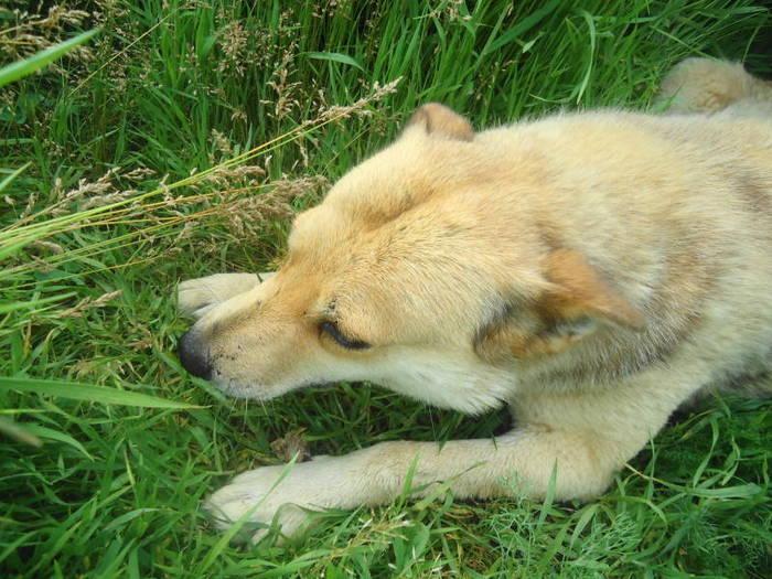 Fetita laying in the grass