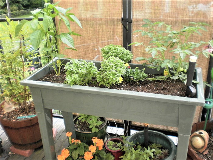 herbs and vegetable plants growing on a deck