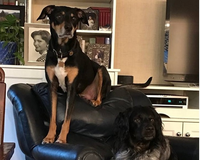 two dogs in a chair