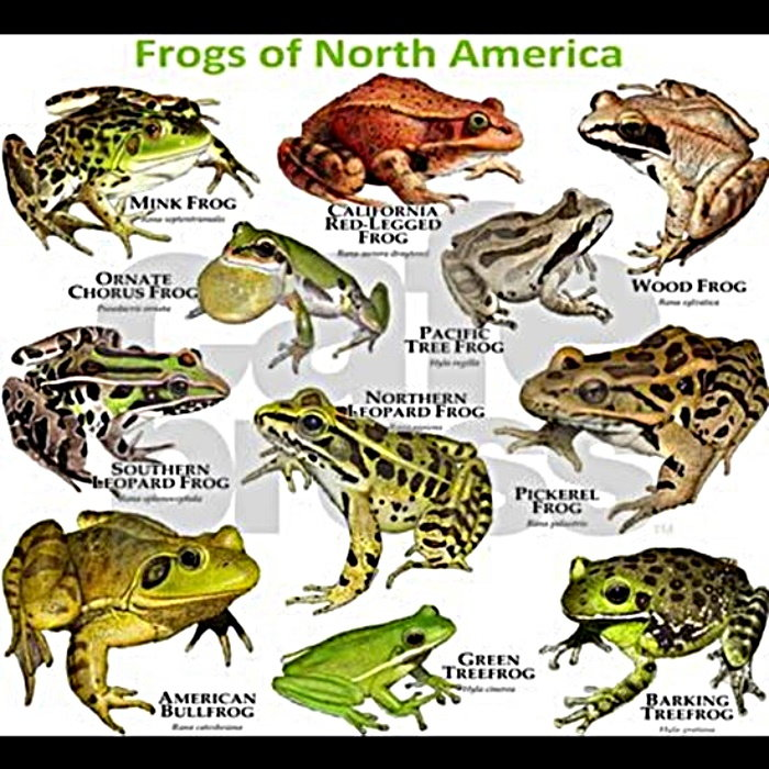 different types of frogs