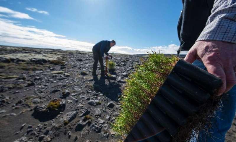 icelanders planting trees
