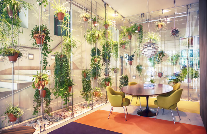 hanging plants inside an apartment