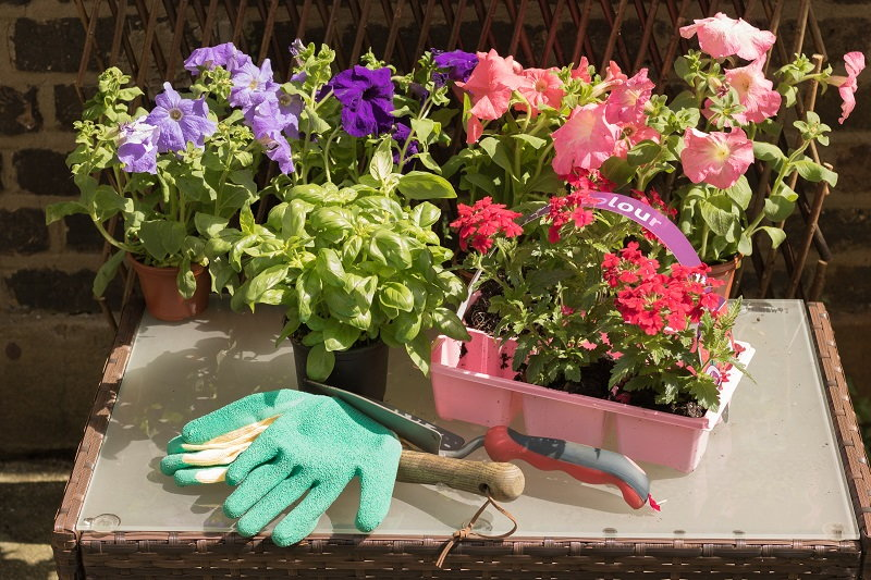 good varieties for container gardening