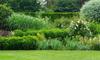 A vibrant garden.